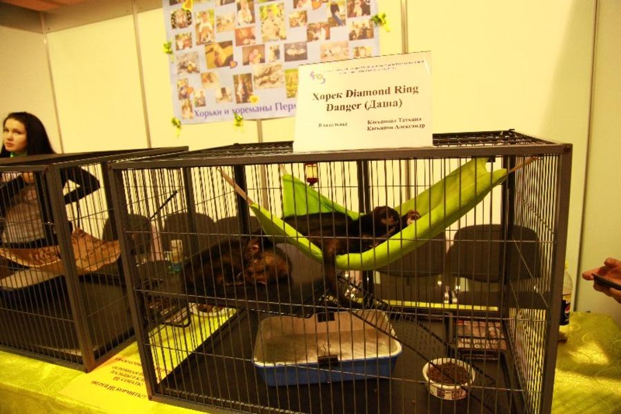 Добро победило зло на выставке кошек в Перми - фото 9