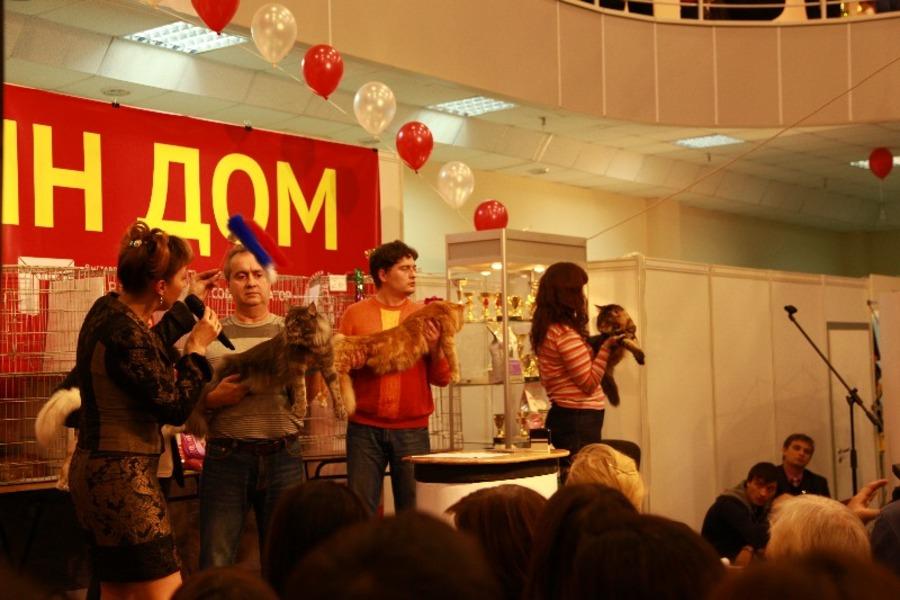 Добро победило зло на выставке кошек в Перми - фото 12