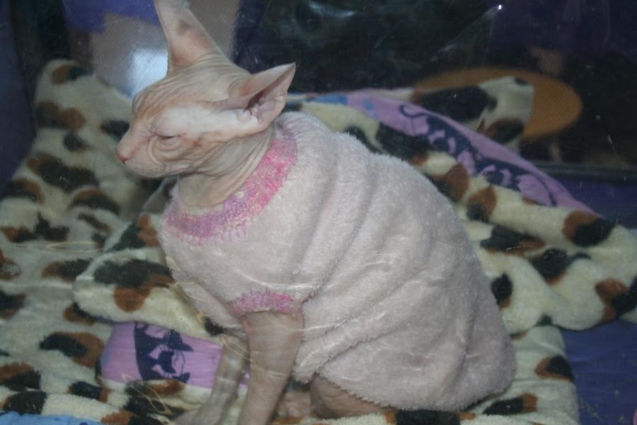 В Перми в «Разгуляе» кипит кошачья жизнь. - фото 1