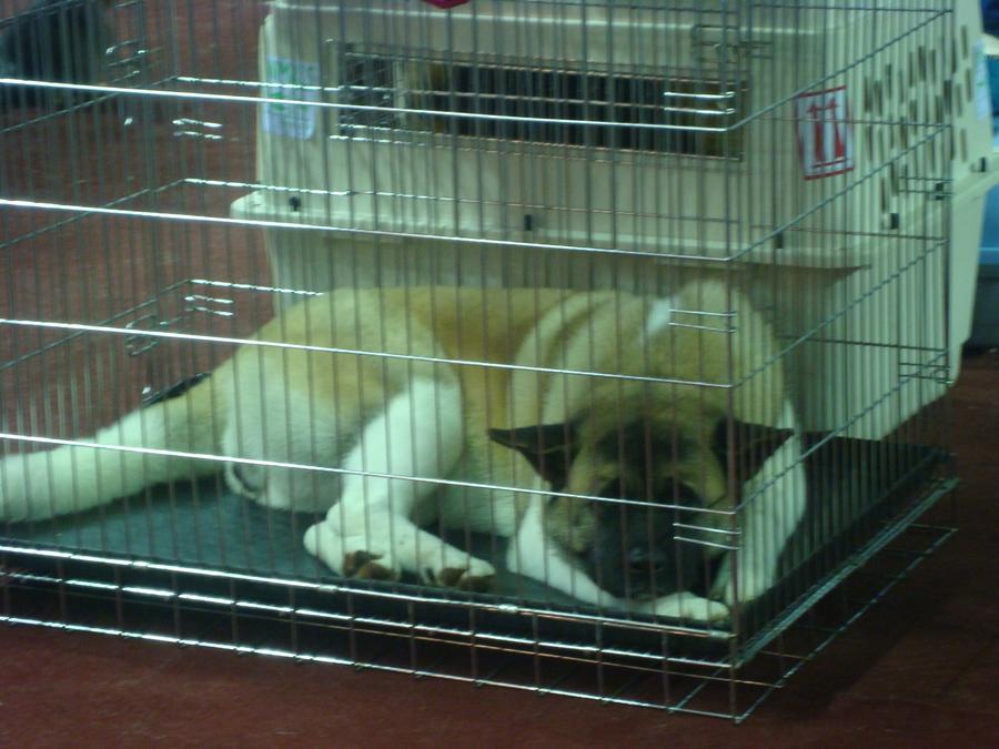 В Перми прошла региональная выставка собак - фото 1