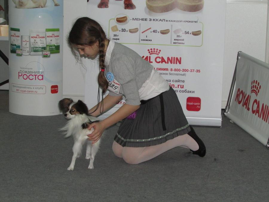 В Перми на собачьей выставке победила Долорес Сверкающая Румба
