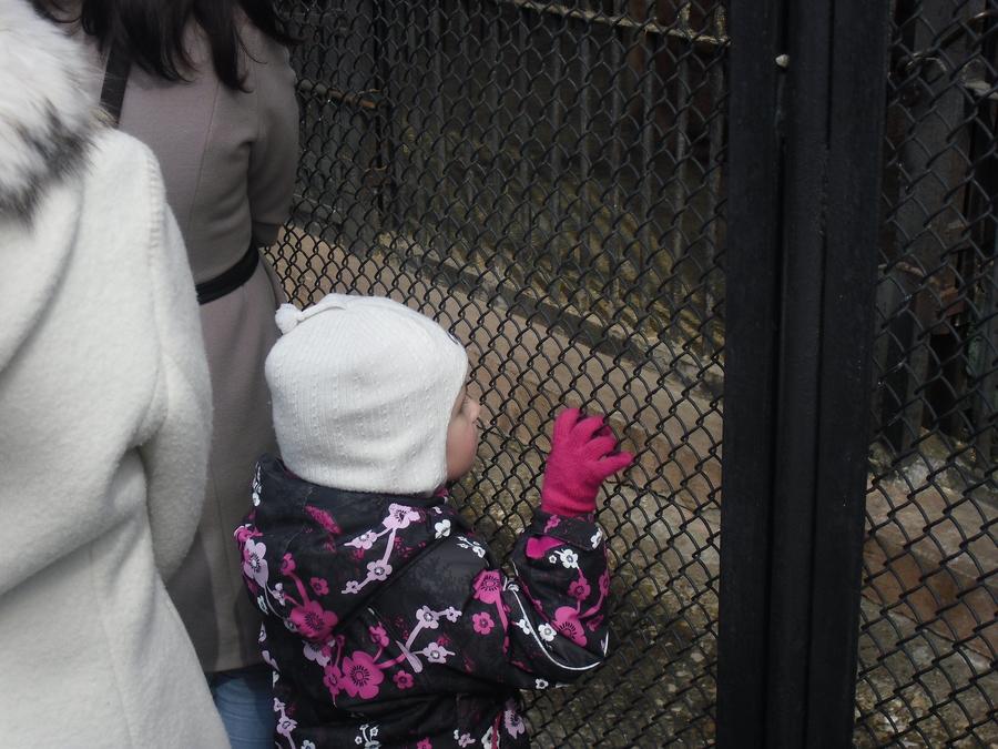 В Перми посетители зоопарка покормили булочками медведей