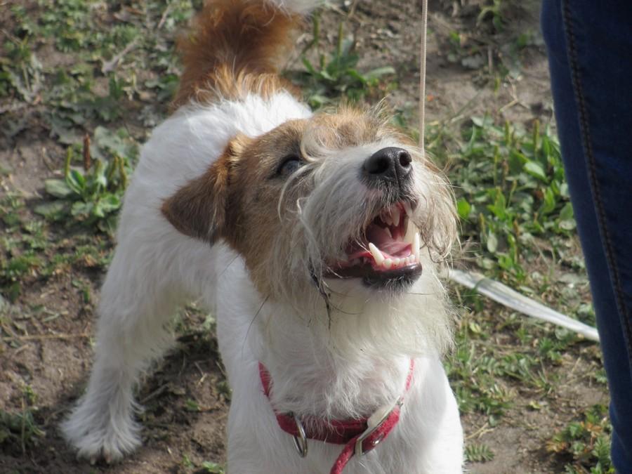 В Березниках прошла традиционная выставка собак - фото 1
