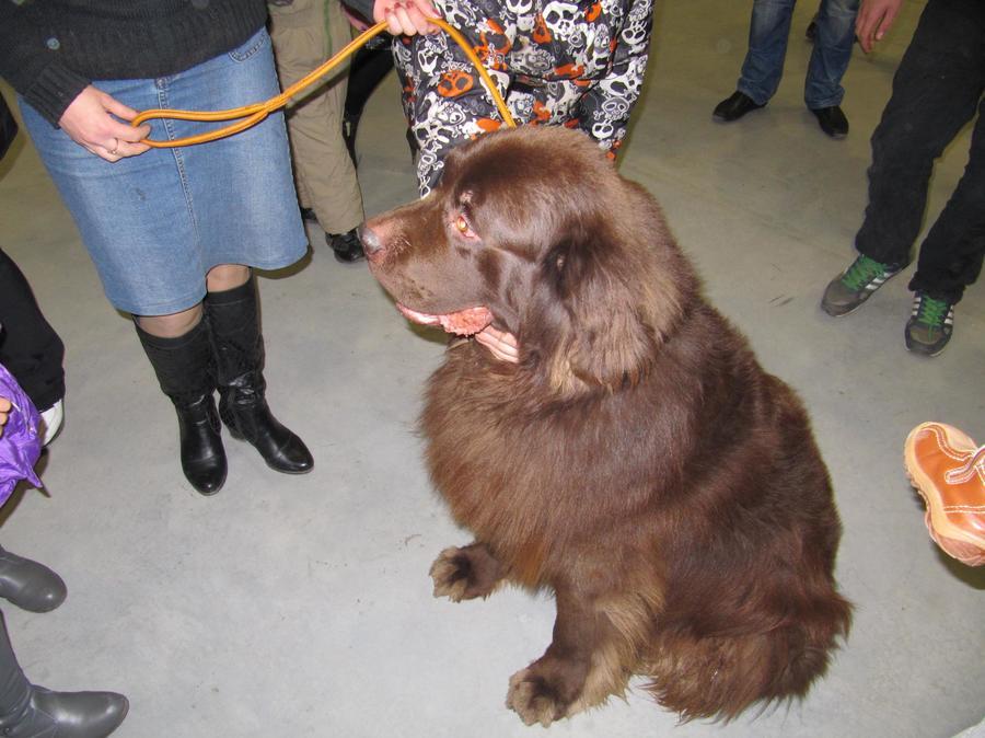 В Перми состоялось открытие Всероссийской выставки собак