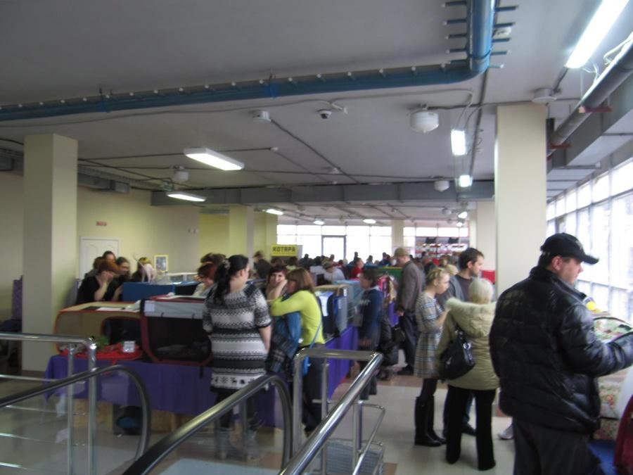 В Перми в «Разгуляе» открылась очередная выставка кошек - фото 7
