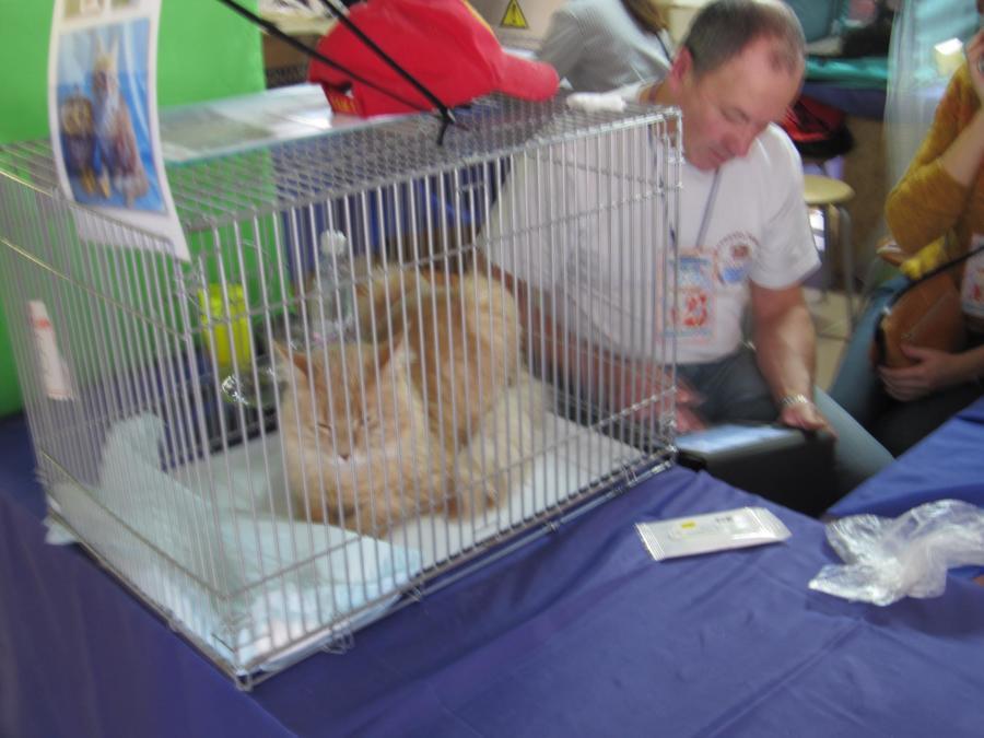 В Перми в «Разгуляе» открылась очередная выставка кошек - фото 14