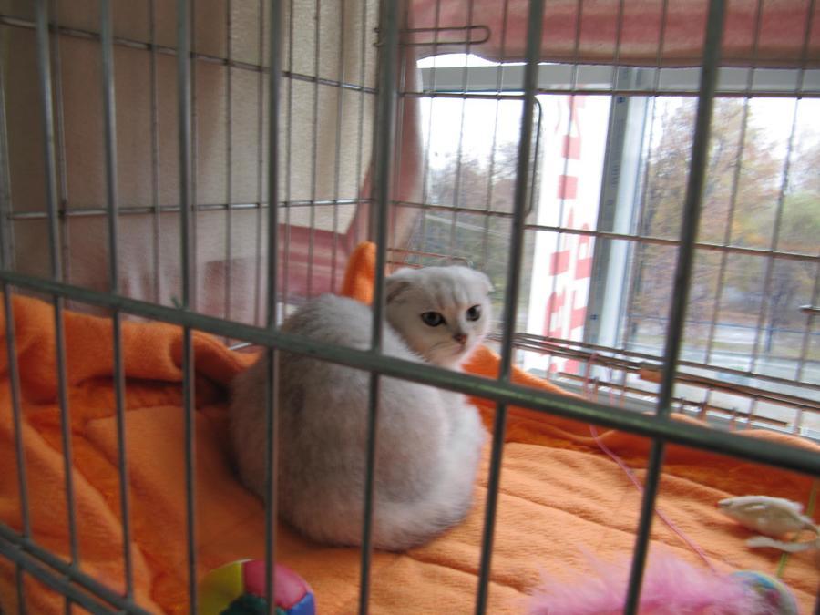 В Перми в «Разгуляе» открылась очередная выставка кошек - фото 19