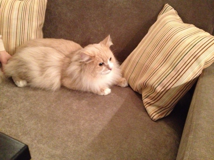 В Перми для любителей кошек открылся райский уголок