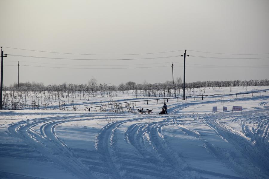 В Пермском крае сегодня гонялись на собаках