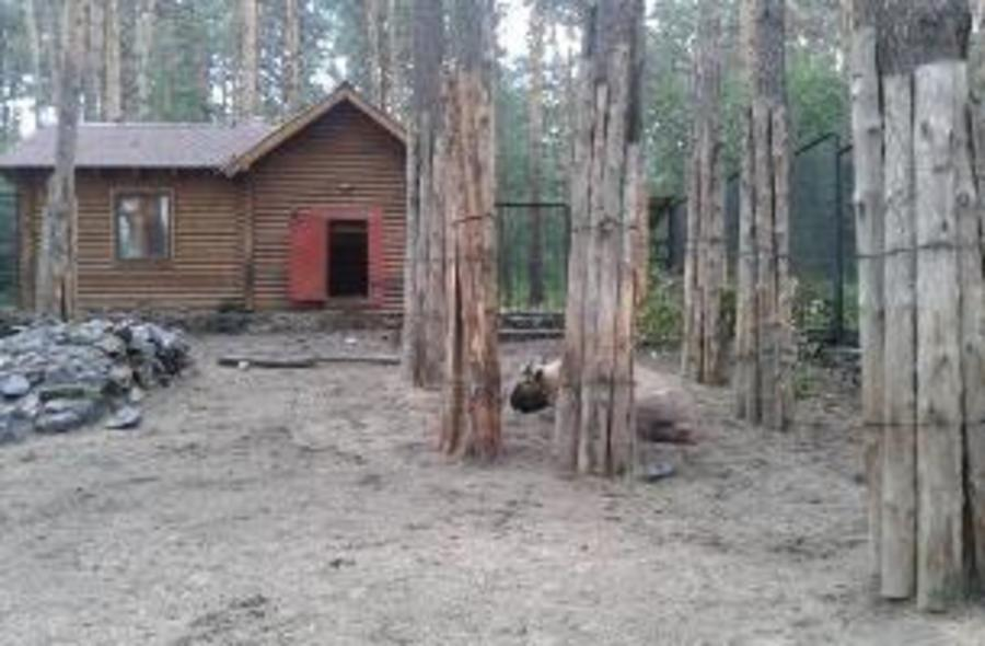 В России и в мире лесопарки не страдают от зоопарков
