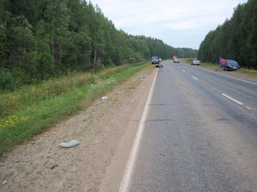 В Карагайском районе водитель Мазды сбил лося - фото 2