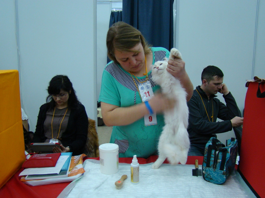 Кошки оккупировали «Пермскую ярмарку»