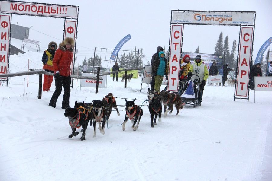Прошел чемпионат Пермского края по гонкам на собаках