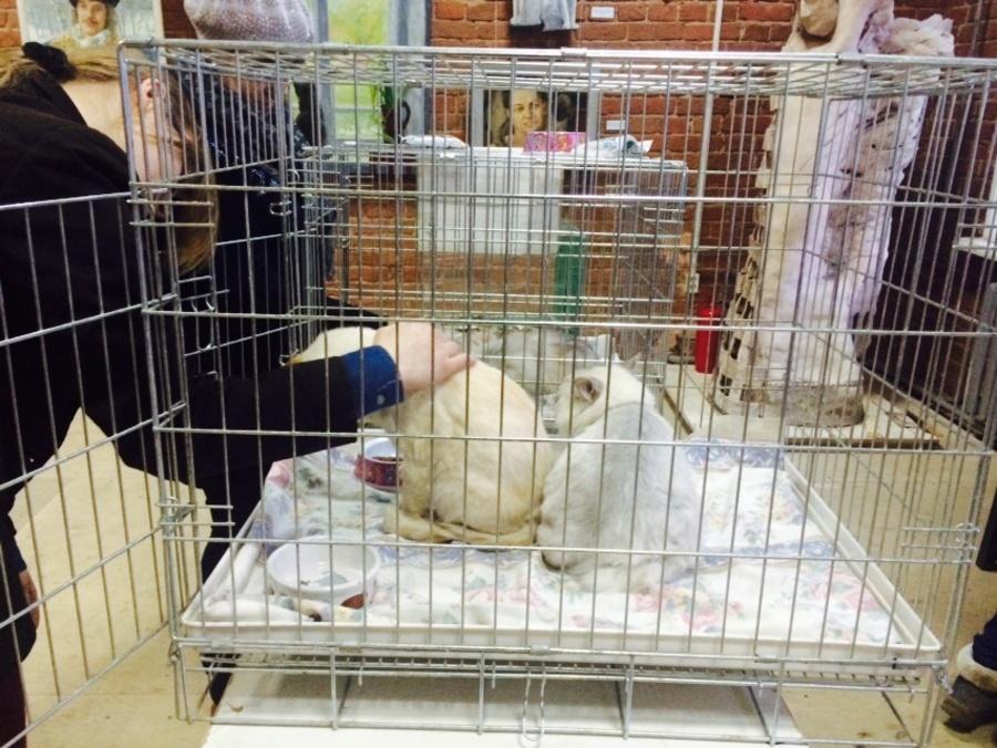 Кошки покорили сердца пермяков - фото 1