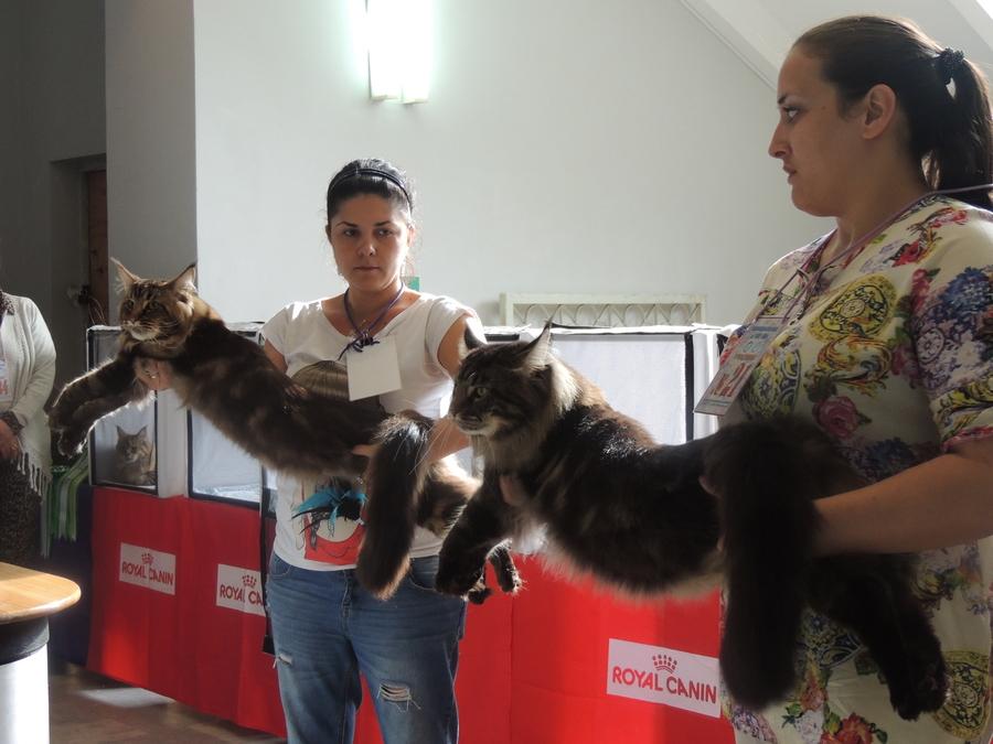 Выставка кошек в Перми разочаровала участников - фото 1