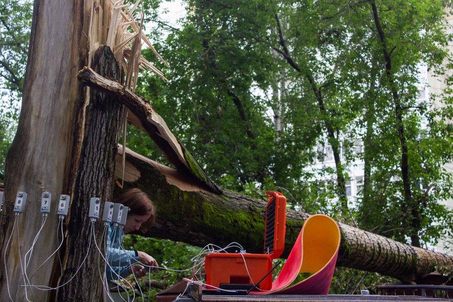 В Перми обследуют здоровье деревьев томографом