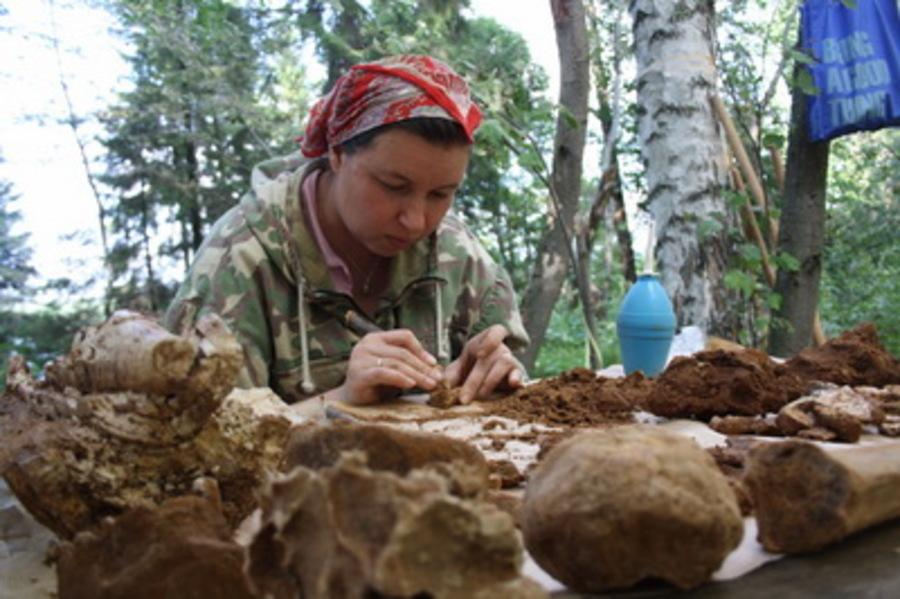 В Пермском крае откапывают трогонтериевого слона