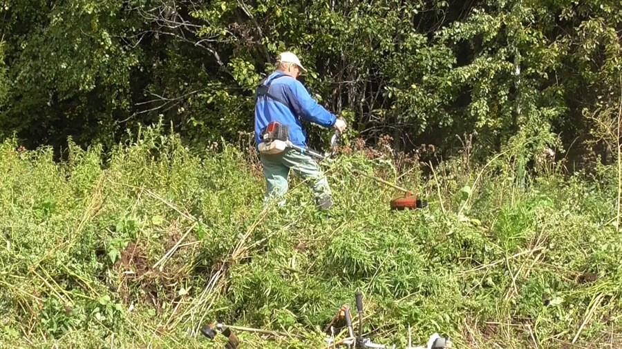 В Кунгурском районе обнаружено целое поле конопли - фото 1