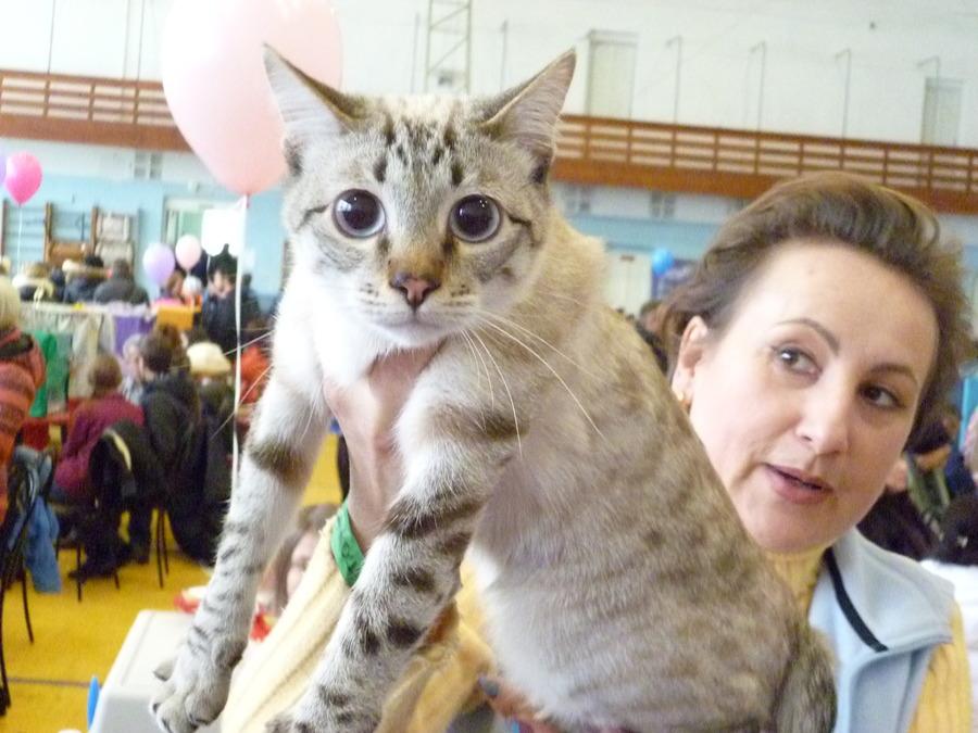 В Чайковском собрались любители кошек
