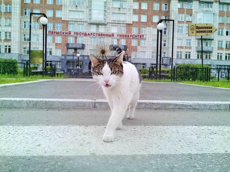 Талисманом Пермского университета стал ученый кот - фото 1
