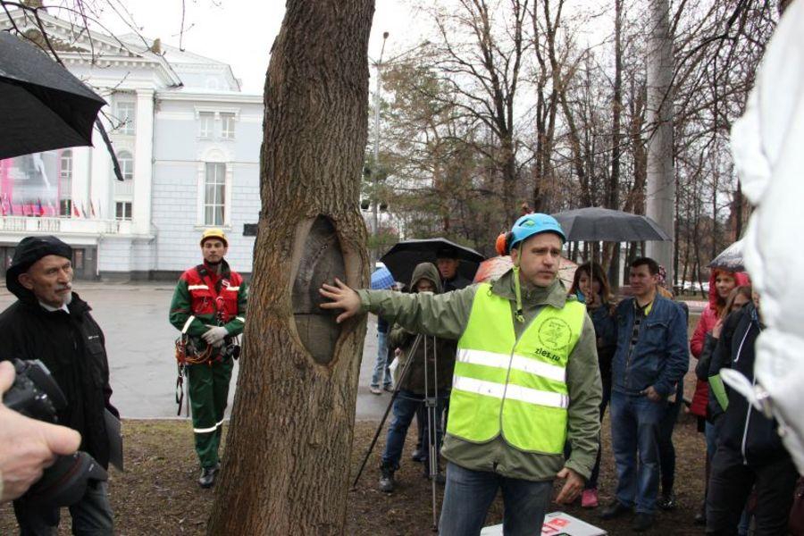 В Перми всем подозрительным деревьям сделают кардиограмму