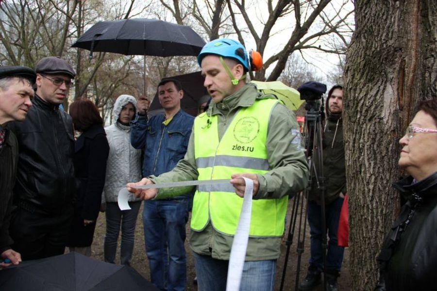 В Перми всем подозрительным деревьям сделают кардиограмму - фото 2