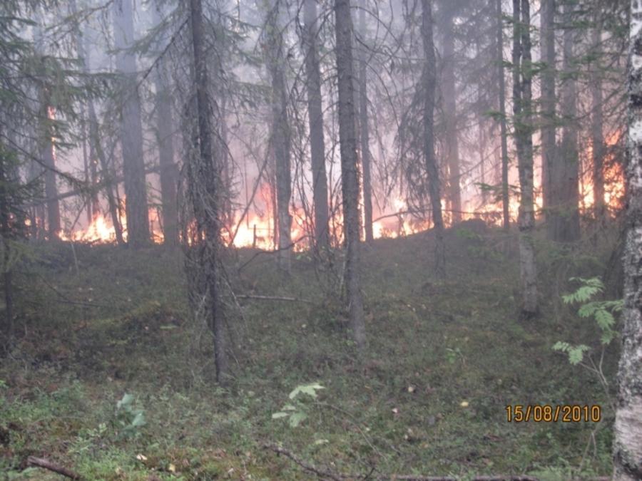 В Пермском крае ликвидированы два лесных пожара