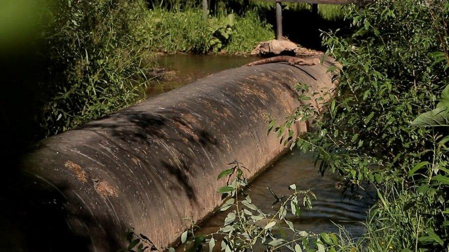 Ученые Пермского университета исследовали зеленую воду речки Ивы
