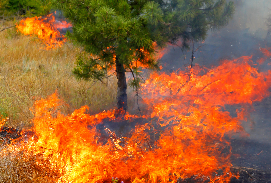 В Пермском крае действуют 6 лесных пожаров