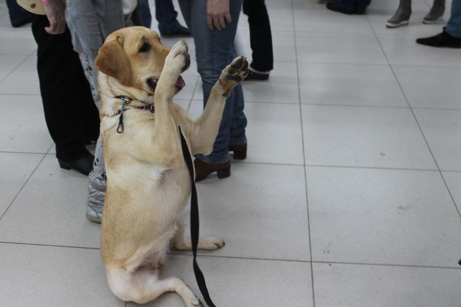 В Перми проходит Всероссийская выставка собак