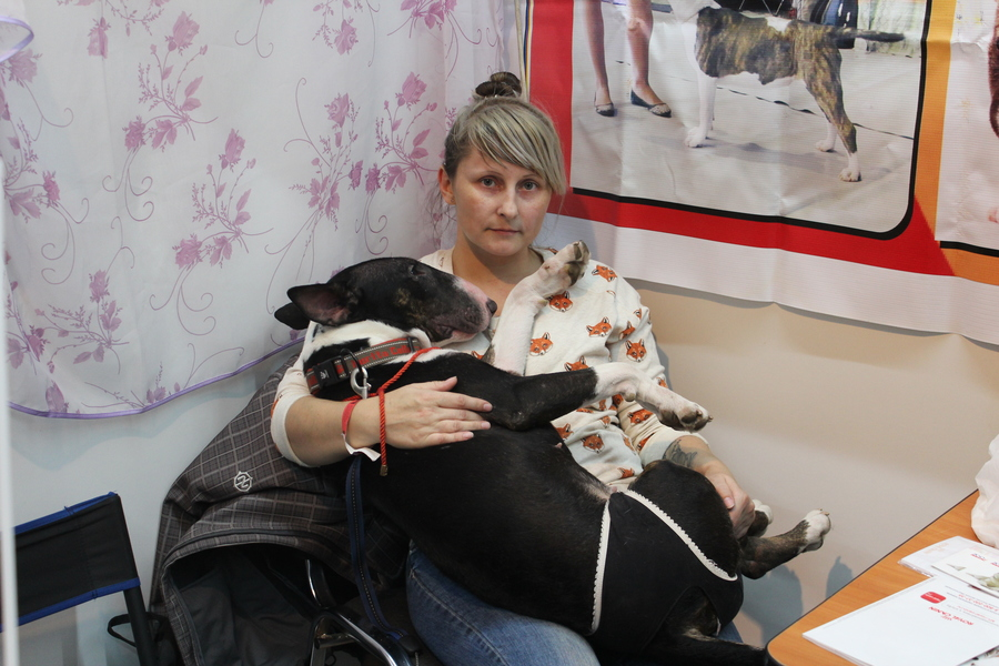 В Перми проходит Всероссийская выставка собак - фото 7