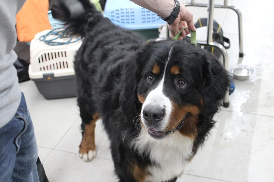 В Перми проходит Всероссийская выставка собак - фото 8