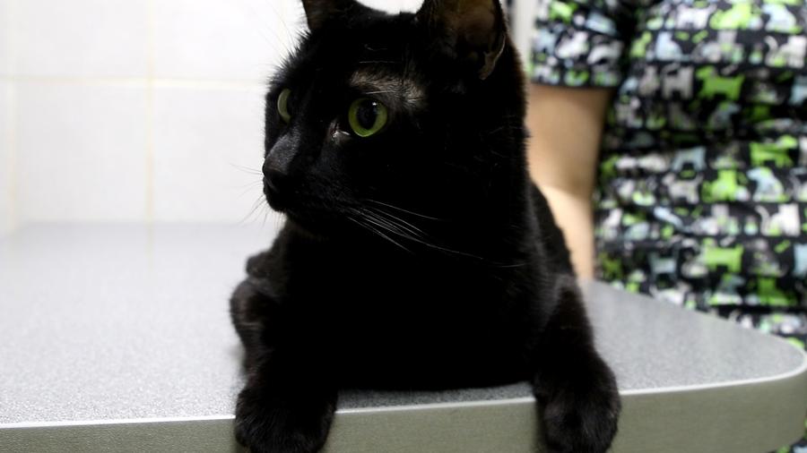 Пермский кот Люцик включился в акцию помощи тяжелобольным детям