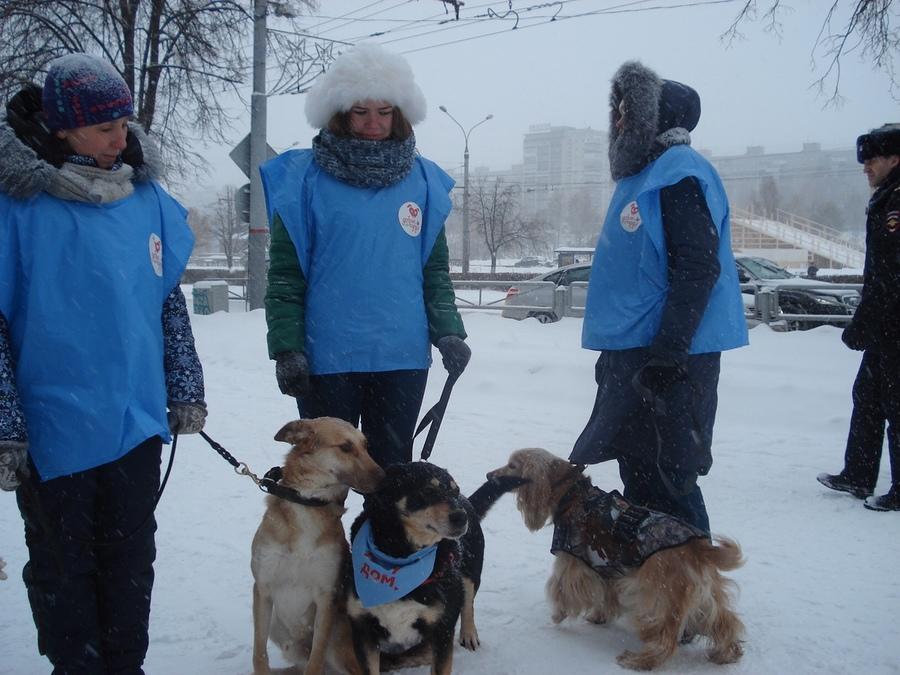 В Перми прошла благотворительная акция «Миска добра» - фото 3