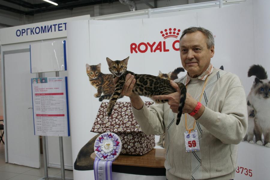 Пермским котам тоже приходится сбрасывать вес - фото 3