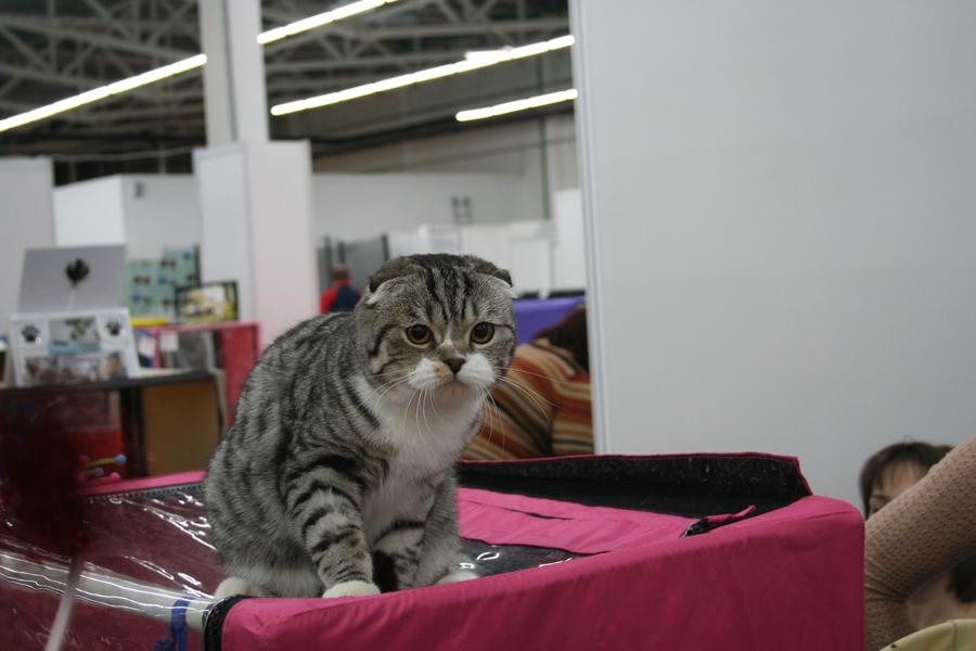 Пермским котам тоже приходится сбрасывать вес - фото 4