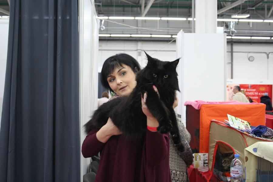 Пермским котам тоже приходится сбрасывать вес - фото 7