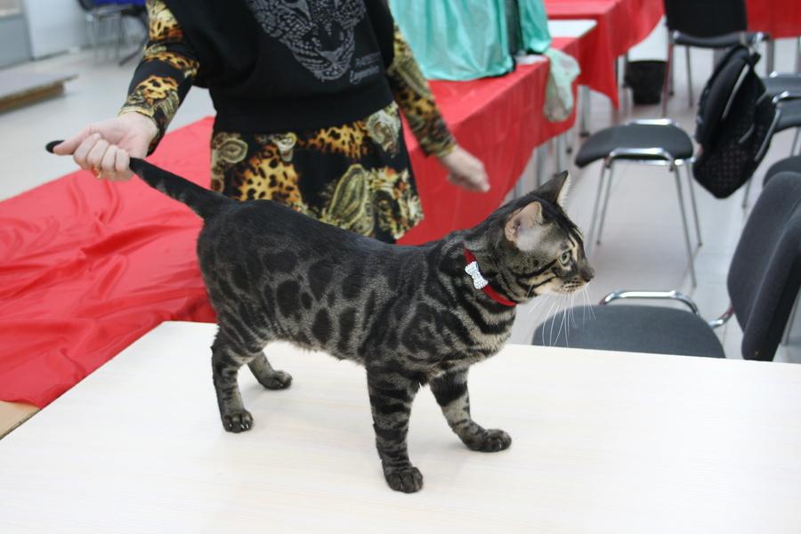 Пермским котам тоже приходится сбрасывать вес - фото 8
