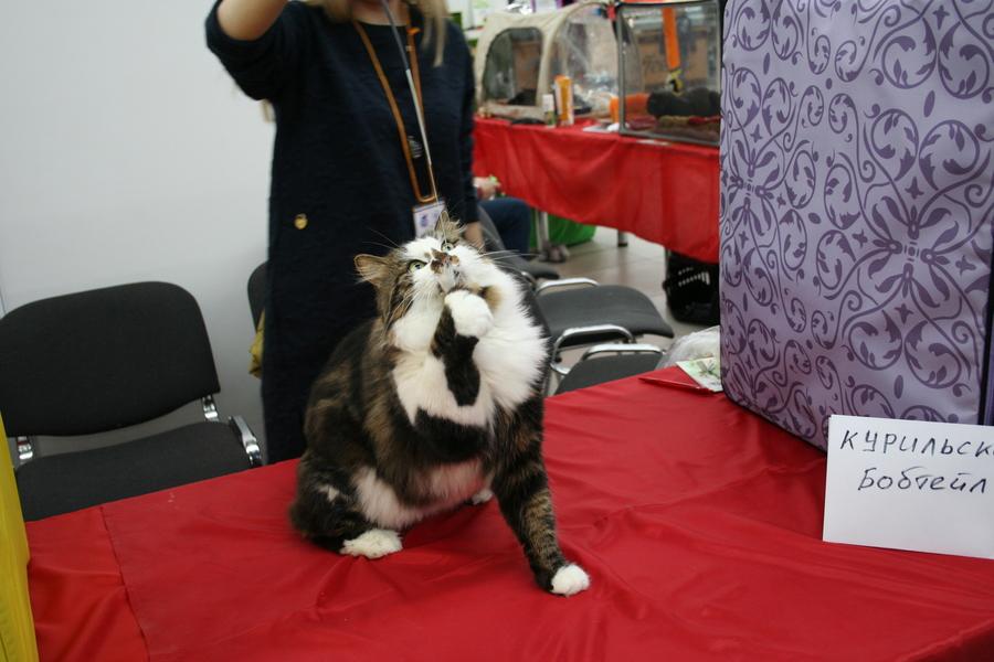 Пермским котам тоже приходится сбрасывать вес - фото 9
