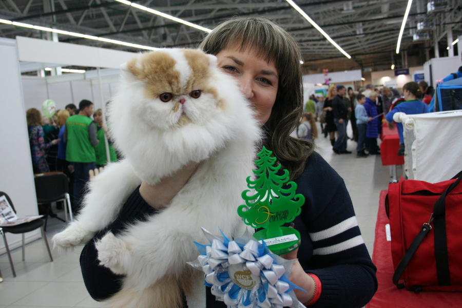 Пермским котам тоже приходится сбрасывать вес - фото 12