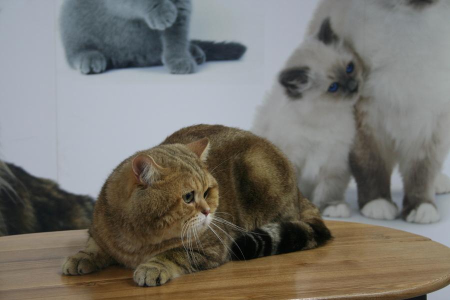 Пермским котам тоже приходится сбрасывать вес - фото 14