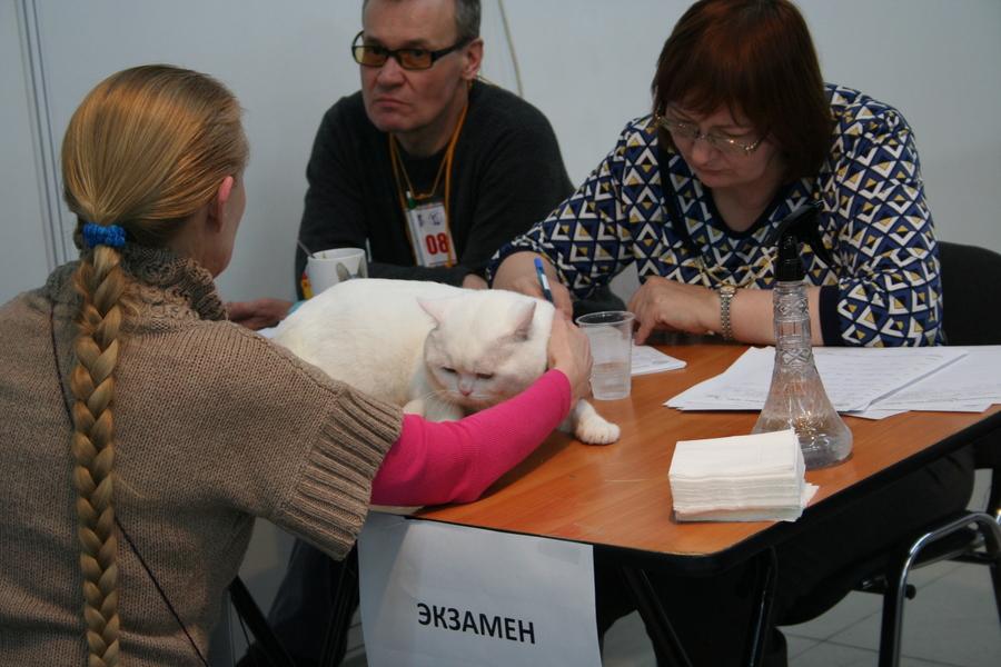 Пермским котам тоже приходится сбрасывать вес - фото 15