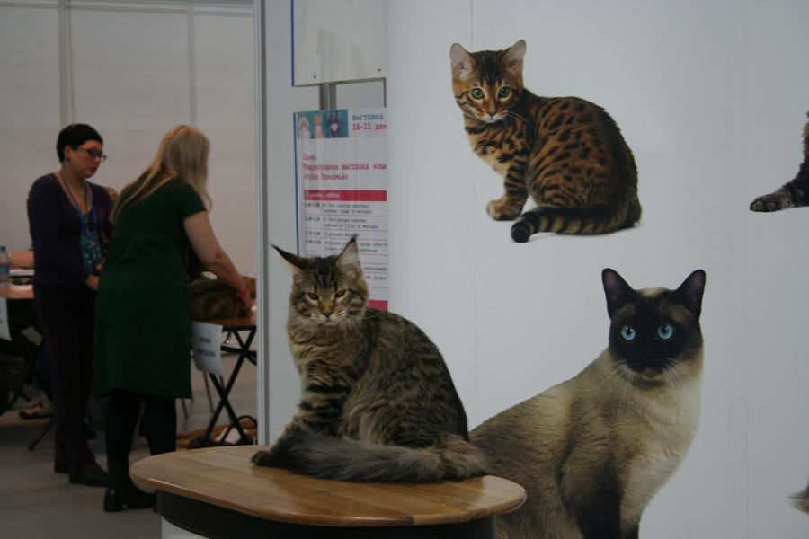 Пермским котам тоже приходится сбрасывать вес - фото 16