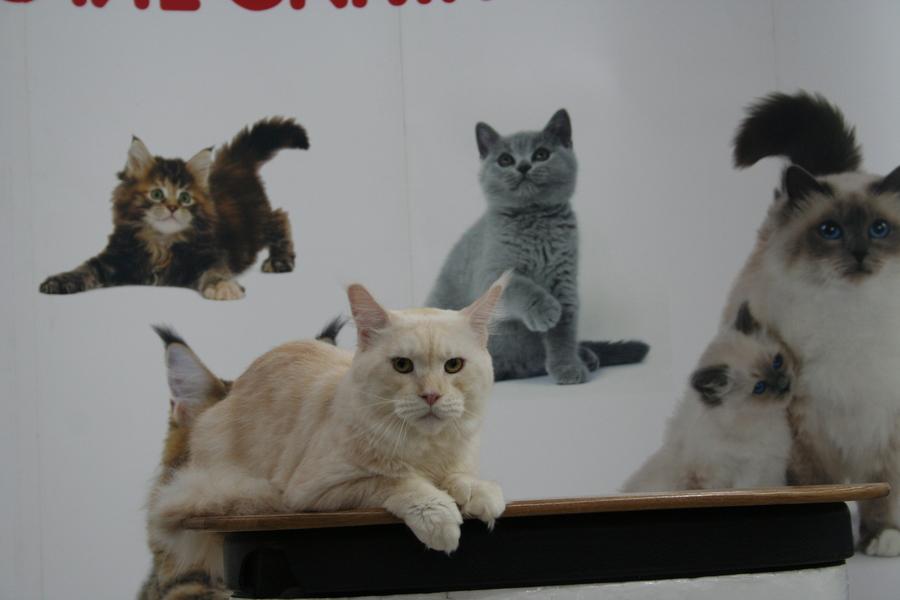 Пермским котам тоже приходится сбрасывать вес - фото 18