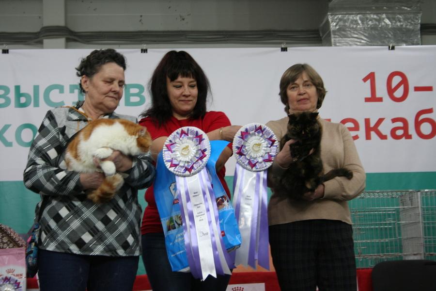 Пермским котам тоже приходится сбрасывать вес - фото 23