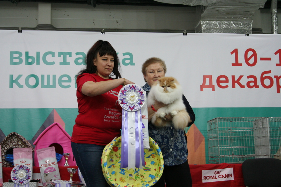 Пермским котам тоже приходится сбрасывать вес - фото 24