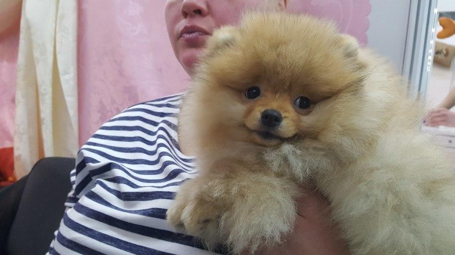 На выставке собак в Перми не протолкнуться