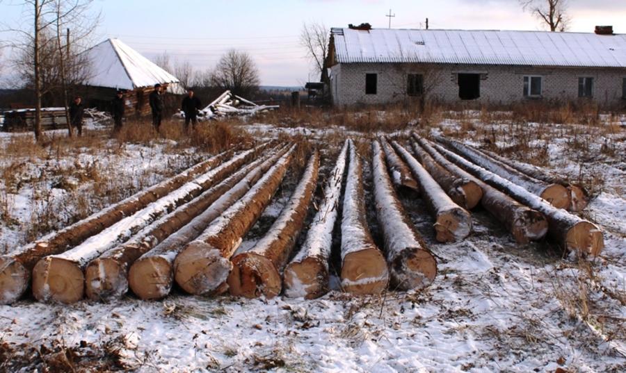 Передано в суд дело черного лесоруба из Кунгурского района