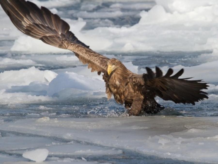В Перми обнаружили самую крупную птицу края - фото 1