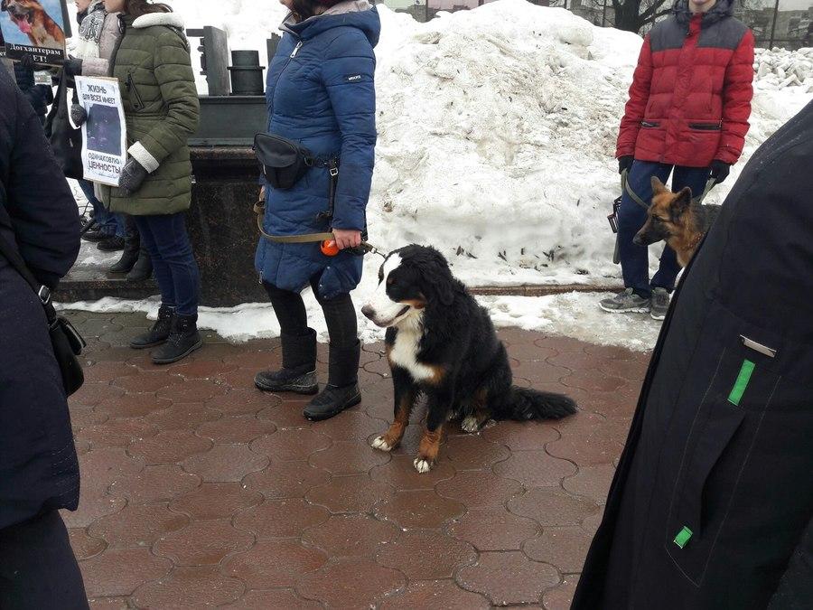 В Перми прошел митинг в защиту животных - фото 3